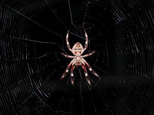 Spider-Webs-creepy-968300-l